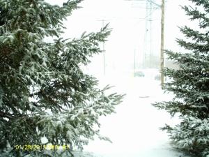 A MILD SNOWSTORM IN CANADA